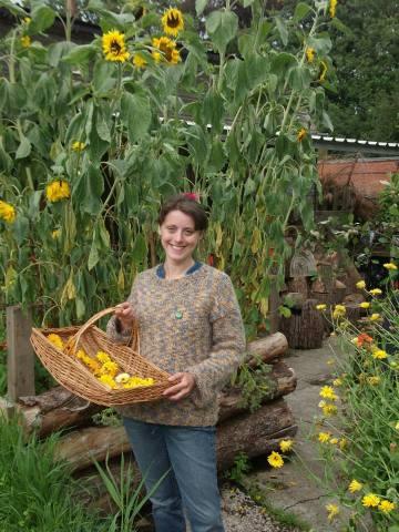 helen sunflowers