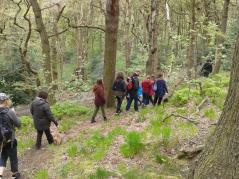 herb walk in the woods