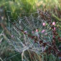 spider web and dock